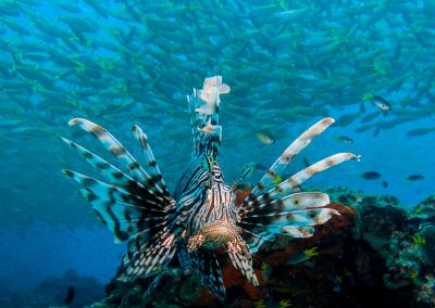 Lightroom LL - Lionfish (12 of 18)