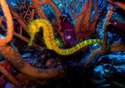 Lightroom LL - Seahorses and Pipefish (21 of 41)